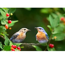 Pair of Bluebirds Photographic Print