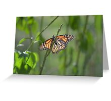 Winged Reflections Greeting Card