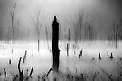 Fog and Light by Mary Ann Reilly