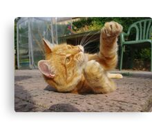Ginger cat playing on patio Canvas Print