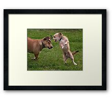 Dogs with game face on .8 Framed Print