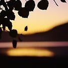 Aspen Leaves by JoAnn Glennie