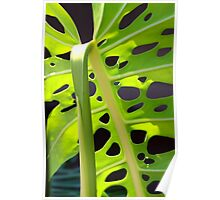 Swiss Leaf - Macro Photography Poster