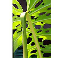 Swiss Leaf - Macro Photography Photographic Print