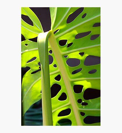 Swiss Leaf - Macro Photography Photographic Print