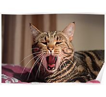 Look at him ROAR...well, yawn! Poster