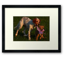 Pearl wants Charlie's Butterfly  Framed Print