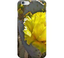 """Santa Rita Cactus Bloom"" iPhone Case/Skin"