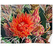 """Barrel Cactus Bloom"" Poster"