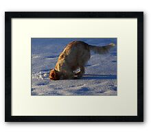Pearl hunting Voles   Framed Print
