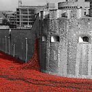 Tower Poppies by Sparowsong