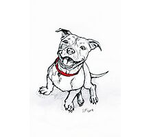 Happy Staffie Photographic Print