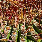 """Barrel Cactus Spine Detail"" by AlexandraZloto"