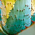 """Cactus Abstract"" by AlexandraZloto"