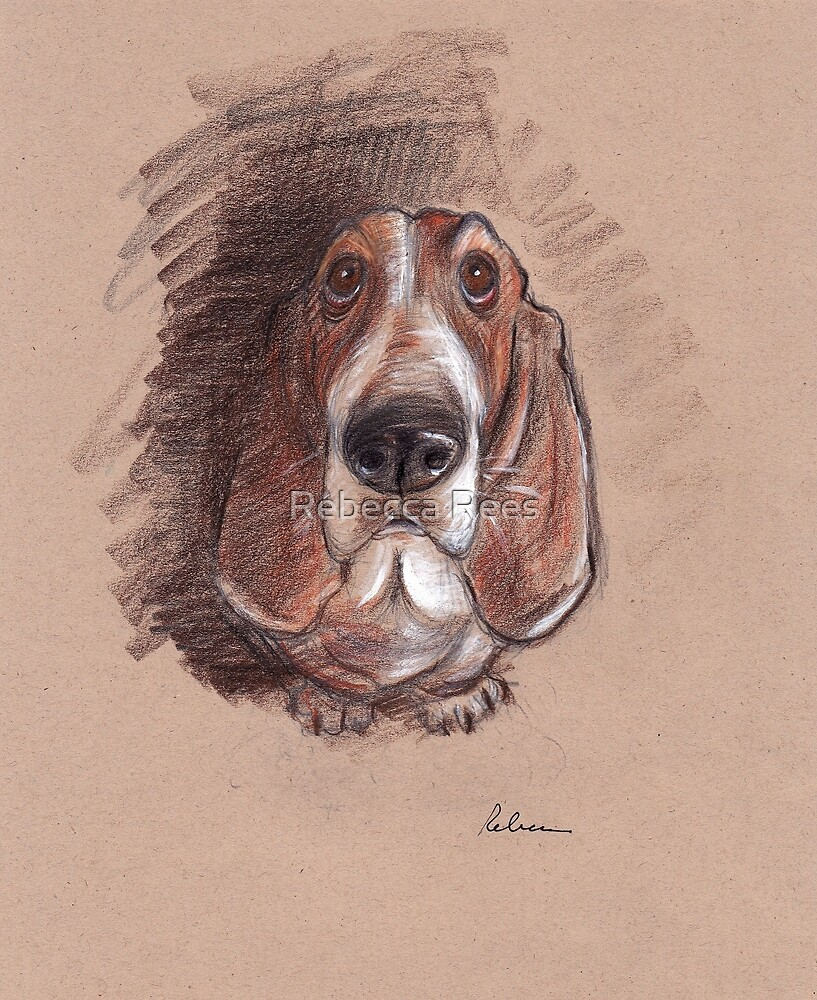 Lovable Basset Hound Looking For A Forever Home by Rebecca Rees