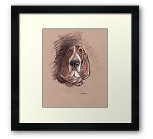Lovable Basset Hound Looking For A Forever Home Framed Print