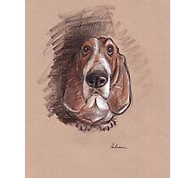 Lovable Basset Hound Looking For A Forever Home Photographic Print