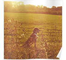 A Dog in a Field Poster