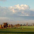 farm in fog by julie anne  grattan