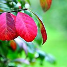 The Burning Leaves of a Burning Bush by Poete100