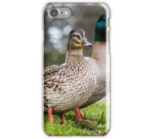 Mallard Couple iPhone Case/Skin