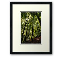 In the forest - Rhineland-Palatinate Framed Print