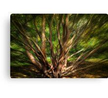 Autumn's Path through Trees and Shadow Canvas Print