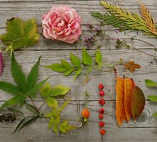 All the things of fall. by JennAshton