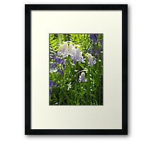 The Gorgeous White Bluebell with a hint of blue art print Framed Print