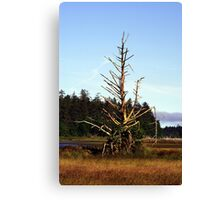 Snag Tree in Bird Sanctuary (Masset, Haida Gwaii, British Columbia, Canada) Canvas Print