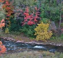 16 Mile Creek in Fall Splendor by Gillian Marshall