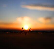 Barbed Sunrise by josephjames