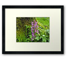 Early Purple Orchid flower print Framed Print