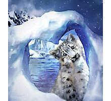 Snow Leopard - Heart Warmer Photographic Print