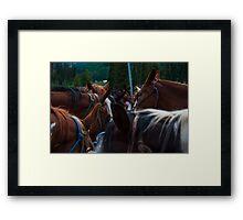 Band of Horses Feeding in Colorado  Framed Print