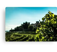 summer day in the vineyard Canvas Print