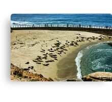 The Children's Pool Beach Seals in La Jolla California Canvas Print