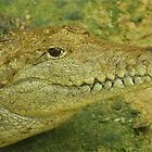 Never Smile at a Crocodile by Penny Smith