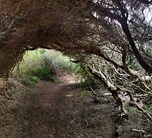 ti-tree tunnel by jayview