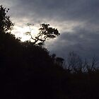 bush silhouettes  by jayview