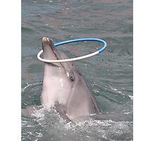 Dolphinarium in Anapa Photographic Print