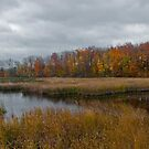 A Gray Day In Autumn by sundawg7