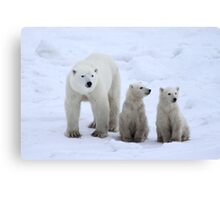 FAMILY PORTRAIT #2 - Polar Bears, Churchill, Canada Canvas Print