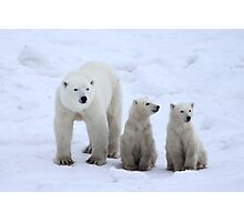 FAMILY PORTRAIT #2 - Polar Bears, Churchill, Canada Photographic Print