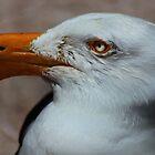 Pacific Gull by myraj