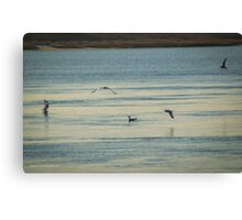 Seagulls At Breakfast | Wantagh, New York Canvas Print