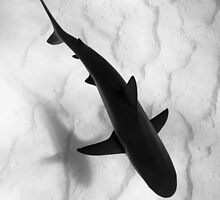 Shark in silhouette by Alison Perkins