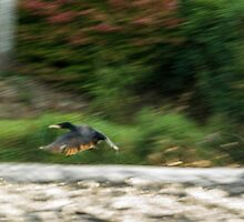 Dynamism of a Cormorant by Alec Owen-Evans