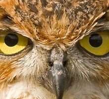 Penetrating Owls Eyes by Old-Time-Images