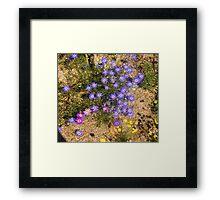 Western Australian Wildflowers, Kings Park, Perth.  Framed Print